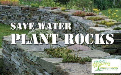 Save Water, Plant Rocks